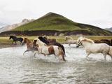 گله اسبهای وحشی رودخانه