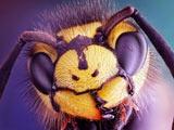 عکس ماکرو سر زنبور