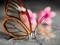 عکس پروانه شیشه ای زیبا