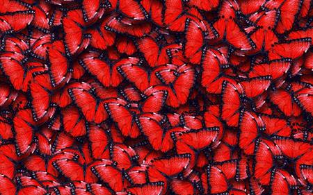 پس زمینه پروانه قرمز red butterflies