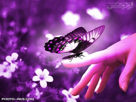 عکس پروانه و دست aks parvaneh va dast