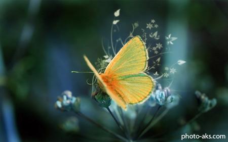 پروانه butterfly