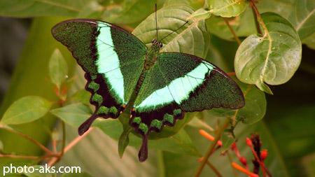 پوستر جدید پروانه poster parvane jadid