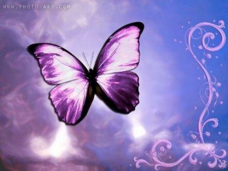 پروانه بنفش در حال پرواز violet butterfly