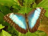 عکس زیبای پروانه