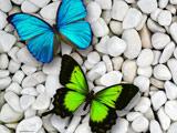 پوستر پروانه های آبی و سبز