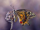 عکس والپیپر زیبا از پروانه ها