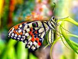 عکس پروانه زیبا روی برگ