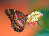 عکس پروانه بسیار زیبا