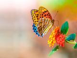 والپیپر زیبا از پروانه رنگارنگ روی گل