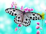 پروانه زیبا با بالهای باز