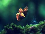 عکس پرواز پروانه زیبا روی چمن