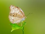 والپیپر های زیبای پروانه ها