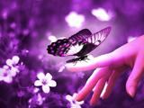 عکس پروانه و دست