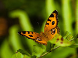 والپیپر زیبای پروانه 2017