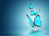 پوستر پروانه های آبی جادویی