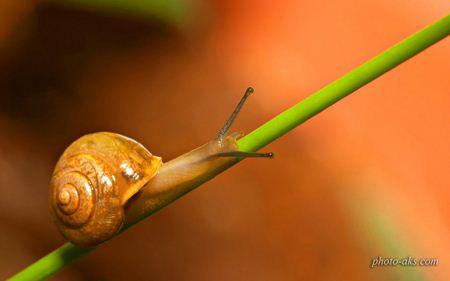 حلزون درختی tree snail
