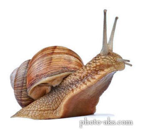 عکس حلزون snail picture