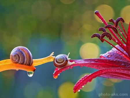 حلزون روی برگ گل snail hd wallpapers