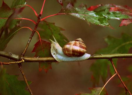 عکس حلزون روی شاخه درخت snail autumn rain