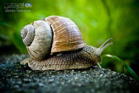 عکس حلزون جنگلی jungle snail