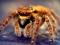عنکبوت ماکرو