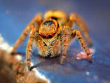 تصویر منتخب از عنکبوت
