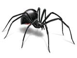 عنکبوت بیوه سیاه