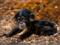 بچه شامپانزه بامزه
