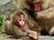 عکس بچه میمون یک ماهه