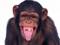 عکس بامزه میمون