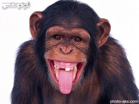 عکس بامزه میمون monkey pictures