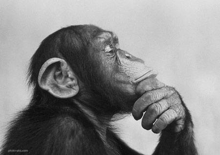 عکس میمون در حال فکر کردن monkey think