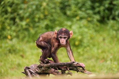 عکس بچه میمون بامزه لاغر monkey nature baby