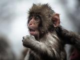 عکس تعجب بچه میمون باحال