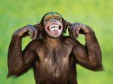عکس شیطنت میمون ها
