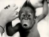 تعجب باحال بچه میمون