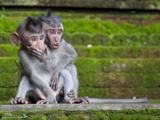 تعجب باحال بچه میمون ها