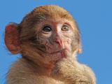 عکس بچه میمون بامزه