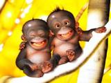 میمون های بانمک