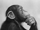 عکس میمون در حال فکر کردن