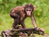 عکس بچه میمون بامزه لاغر