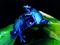 قورباغه آبی سمی