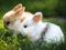 بچه خرگوش های بامزه و کوچولو