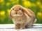 عکس بامزه از خرگوش بالغ