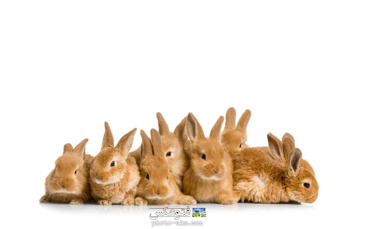 عکس حیوانات کوه