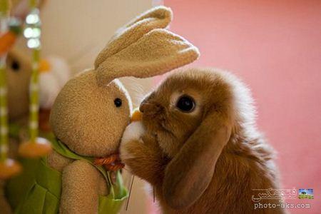 عکس بامزه خرگوش کوچولو little rabbit