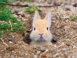 خرگوش بامزه داخل لانه