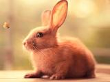 پوستر خرگوش با پروانه