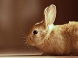 عکس خرگوش قهوه ای بامزه